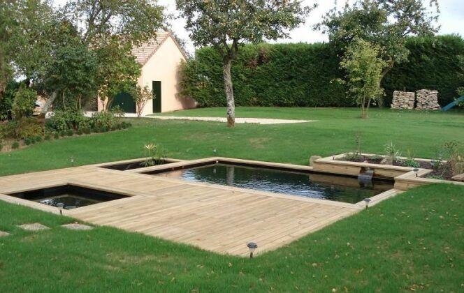 Piscine naturelle de charme composée de 4 zones rectangulaires au beau milieu d'un jardin © Patrick Lemaire Paysage