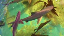 Dans sa cave, une piscine remplie de…requins