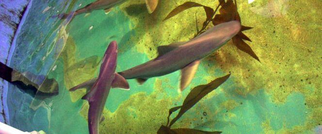 7 requins retrouvés dans la cave d'une propriété, aux Etats-Unis