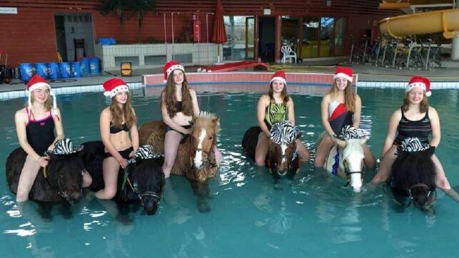 Des poneys dans la piscine