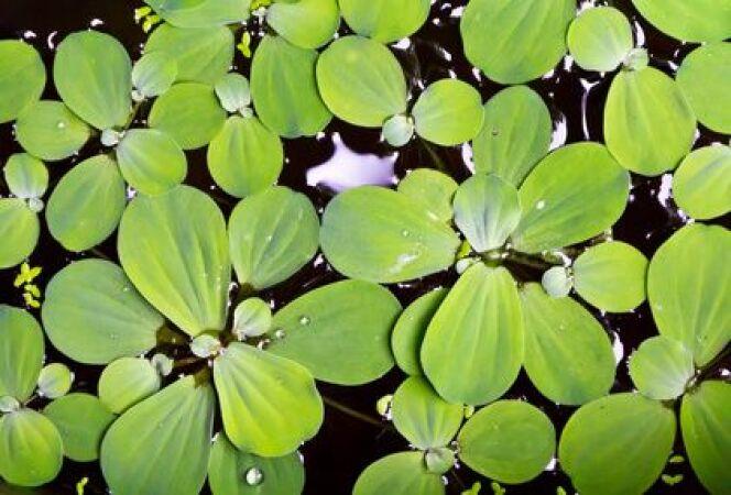"""Bâches et couvertures de piscine personnalisées <span class=""""normal italic petit"""">© wacharaphong - Fotolia.com</span>"""