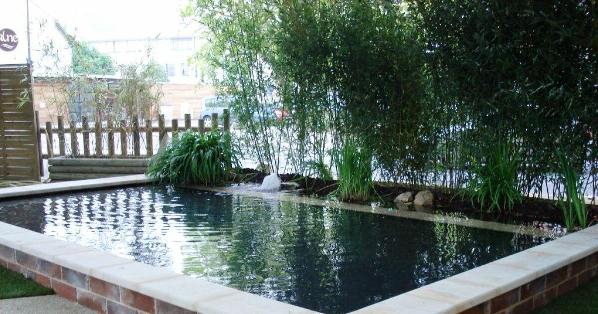 Bassins de baignade biologiques et cologiques rectangulaires piscine naturelle photo 5 - Petit bassin baignade colombes ...