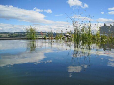 "Bassin de baignade forme libre BIOTOP - Baignade écologique<span class=""normal italic petit"">© BIOTOP - www.baignade-ecologique.com</span>"