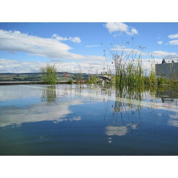 Bassin de baignade forme libre biotop baignade cologique - Piscine type bassin ancien argenteuil ...
