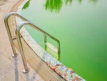 Comment éviter que ma piscine devienne verte en cas de forte chaleur ?