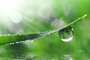 Déco Verte Et Nature à Cuillé
