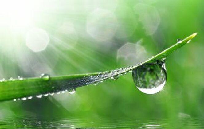 Déco Verte Et Nature à Cuillé © vencav - Fotolia.com