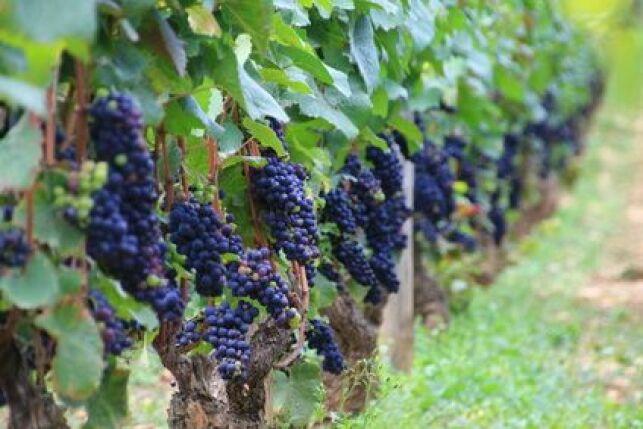 Découvrez les produits du terroir et initiez-vous à l'oenologie durant votre cure thermale en Bourgogne !