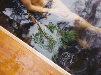 Des algues dans votre piscine