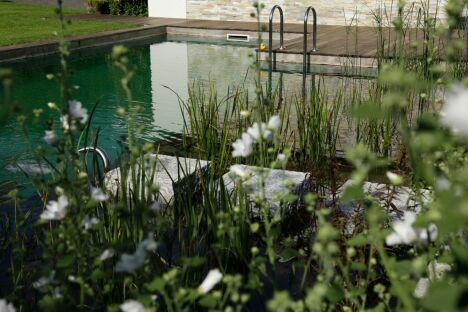 """Des plantes autour de votre piscine<span class=""""normal italic petit"""">© BioTop</span>"""