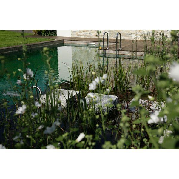 Des plantes autour de la piscine - Plantes autour piscine ...