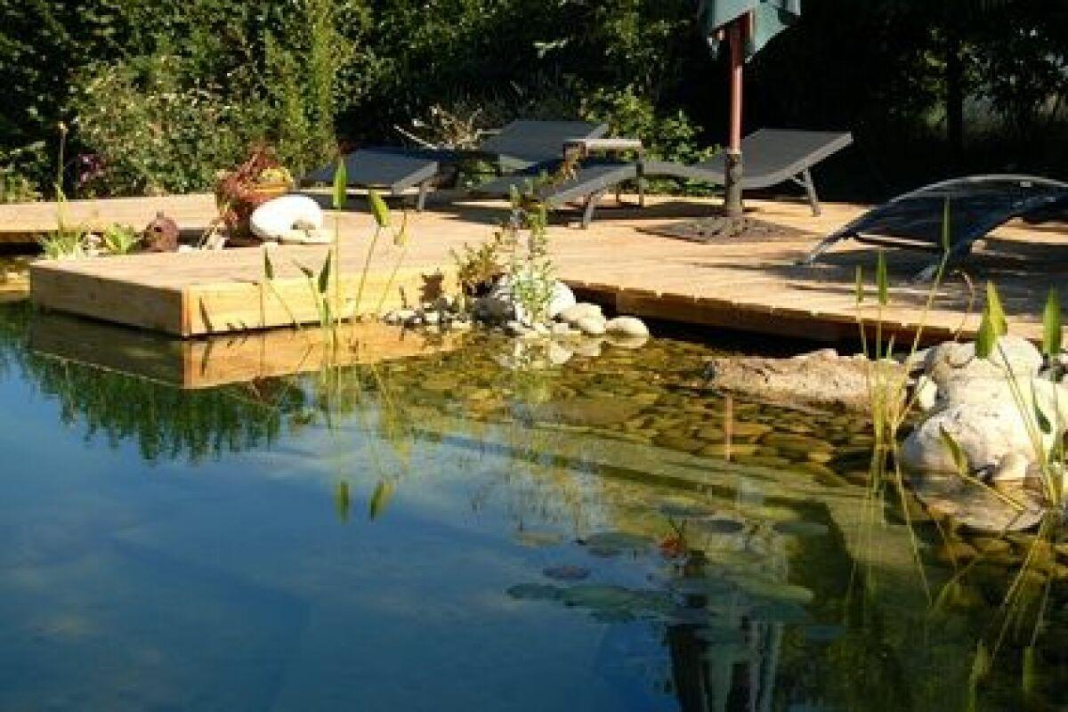 Bassin Poisson Hors Sol peut-on introduire des poissons dans une piscine naturelle