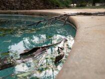 Eau de piscine verte ou trouble après un orage pluvieux, que faire ?