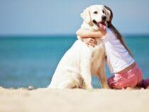 Emmener votre chien à la plage