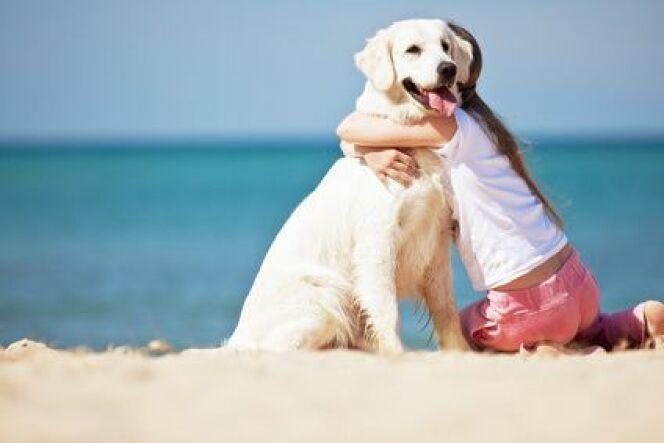 """Emmener votre chien à la plage<span class=""""normal italic petit"""">© Fotolia</span>"""