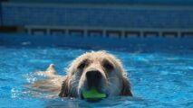 Les chiens ont également leur piscine