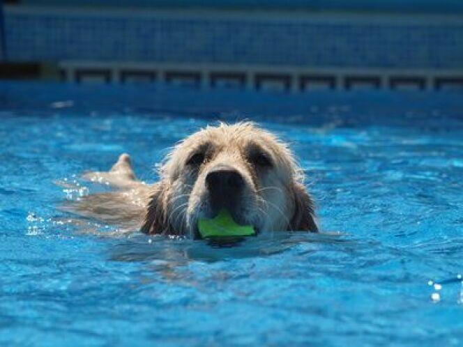 En Belgique, les chiens ont désormais une piscine réservée.