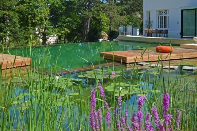 Entretien d'une piscine naturelle