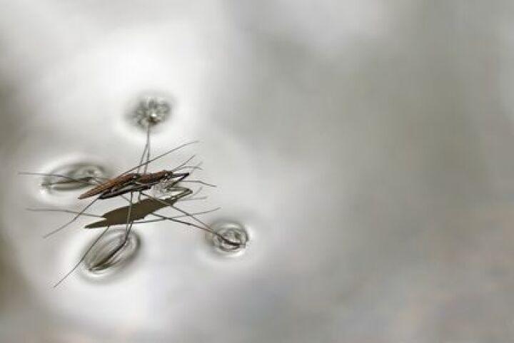 Araign es d eau et gerris dans une piscine comment s en - Comment recuperer eau trouble piscine ...