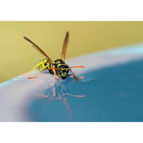 des gu pes autour de votre piscine comment les viter. Black Bedroom Furniture Sets. Home Design Ideas