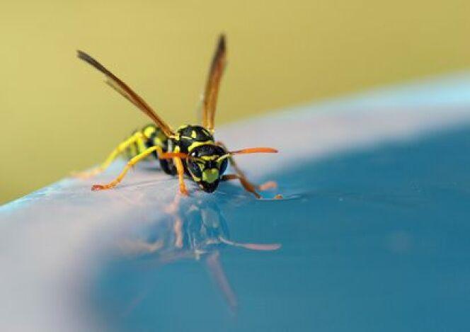 Insecte et piscine