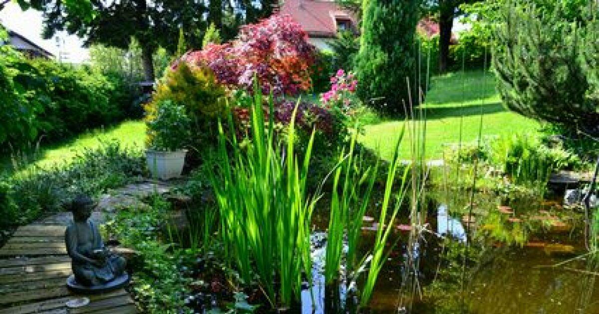 L entretien d une piscine naturelle en automne for Entretien de son jardin