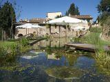 Construction d'une piscine naturelle : installer un bassin biologique chez soi