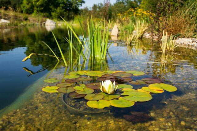 La filtration d'une piscine naturelle