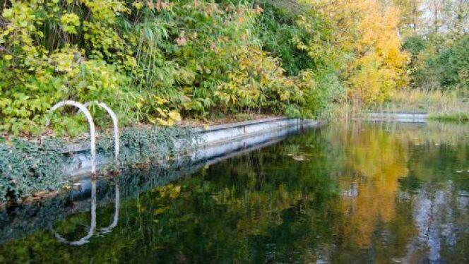 """La piscine biologique est un écosystème vivant dans votre jardin.<span class=""""normal italic petit"""">© miriamvandamme - Thinkstock</span>"""