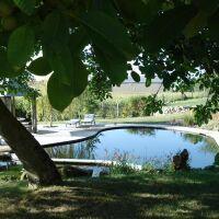 La piscine naturelle et bio : pour une baignade écologique !