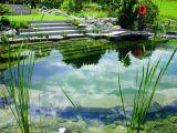 La zone de régénération ou d'oxygénation de votre piscine naturelle