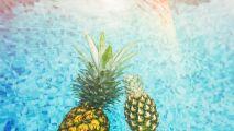 Lab'Box : Analysez l'eau de votre piscine avec Irrijardin