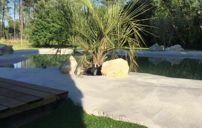 lagon béton quartz résiné cocotier jardin verdure  © PM Construction