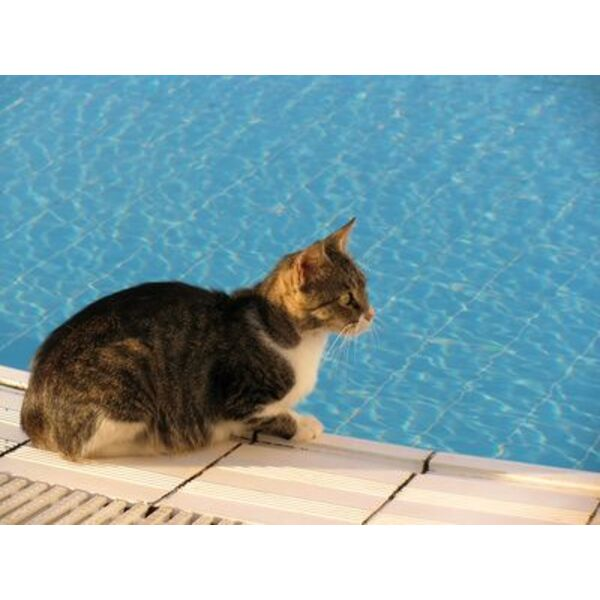 piscine tubulaire chat