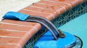 FrogLog : une invention américaine sauve les grenouilles des piscines!