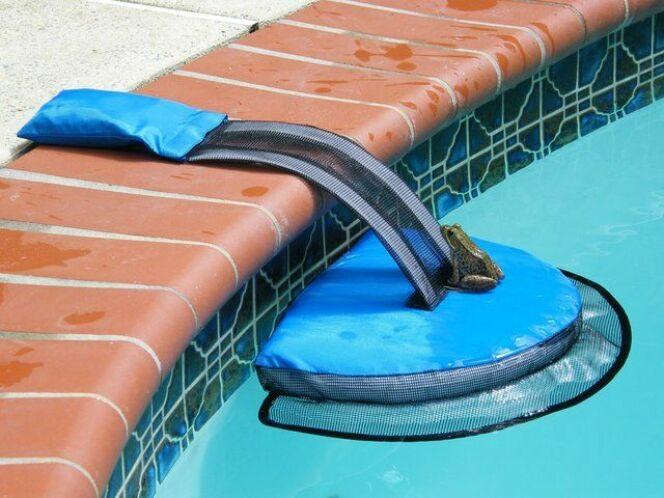 Le système Frog Log permet aux animaux de sortir de la piscine.