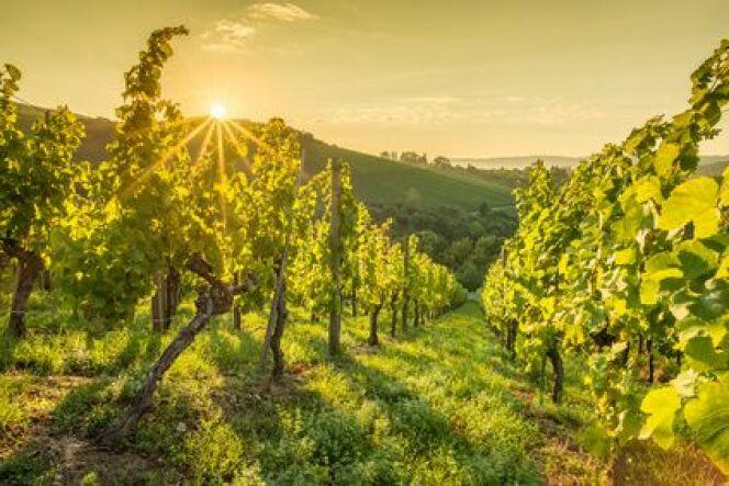 Les bienfaits du raisin et du vin