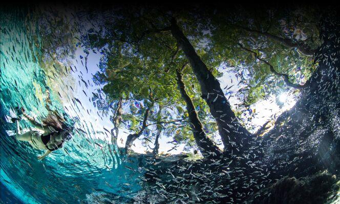 Une baignade au milieu des poissons, à Ginnie Springs