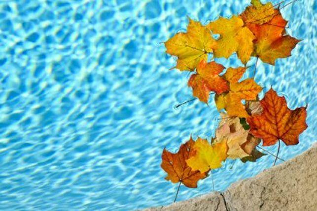 Les feuilles mortes dans la piscine, l'une des conséquences du vent.