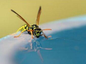 Les insecticides spécial guêpes pour piscine