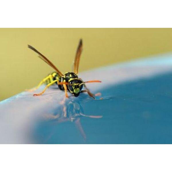 Les insecticides sp cial gu pes pour piscine for Repulsif guepe piscine