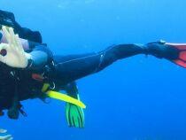 Les palmes de plongée : spécificités et utilisation