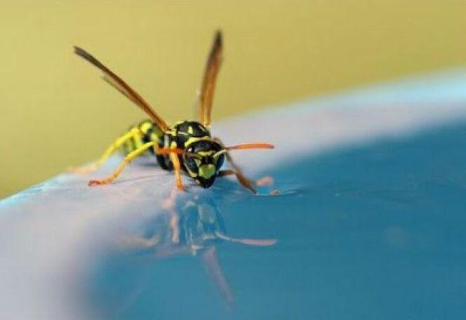 Les répulsifs à insectes pour piscine