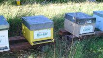 Le Salon Atlantica et les abeilles