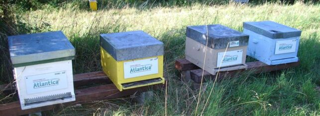 Les ruches parrainées par le Salon Atlantica