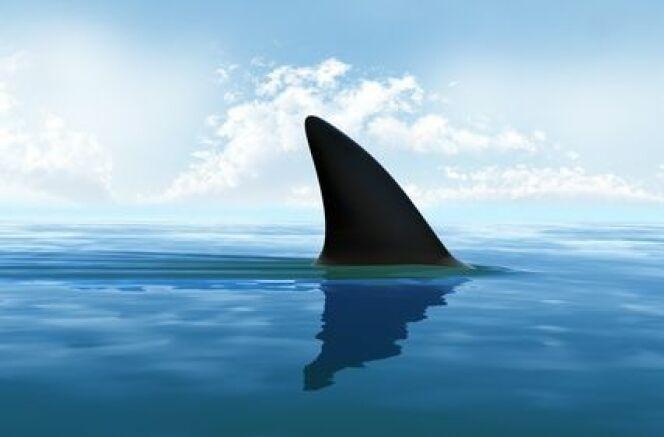 """Nage : les attaques de requin<span class=""""normal italic petit"""">© Fotolia_72995894_XS</span>"""