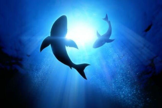 "Nager avec des requins<span class=""normal italic petit"">DR</span>"