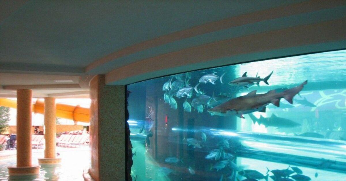Nagez avec des requins dans une piscine de las vegas - Nager dans une piscine ...
