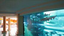 Nagez avec des requins dans une piscine de Las Vegas !