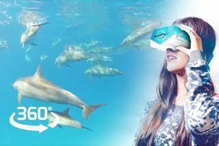 Nager avec les dauphins en réalité virtuelle